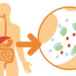 XL-S Medical Force 5 agit sur les graisses alimentaires